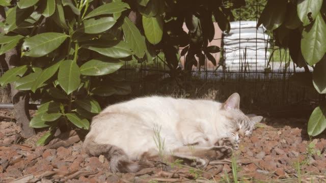 Retrato-de-gato-doméstico-dormir-al-aire-libre-en-el-jardín-de-casa