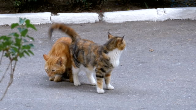 Homeless-March-red-cat-and-three-colored-cat-in-the-city-park