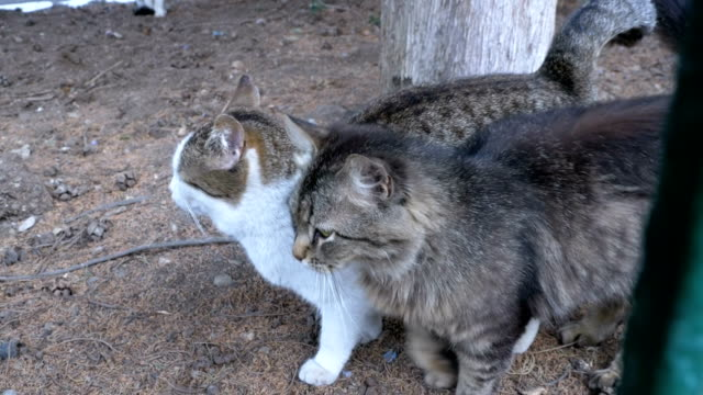 Homeless-gray-cats-together-walk-in-the-park