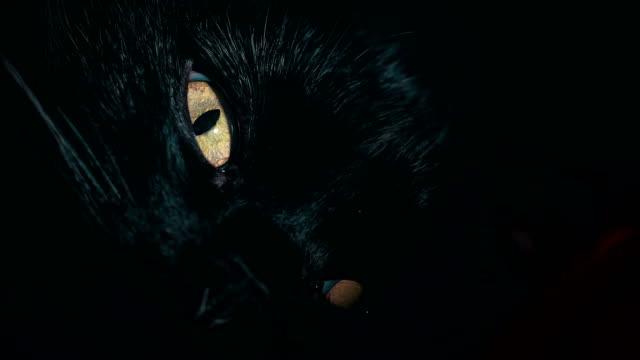 Tight-shot-de-cara-de-un-gato-negro