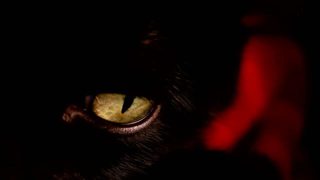 Black-cat-s-yellow-eye-