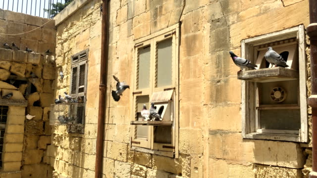 Flock-Of-Pigeons-Standing-On-Shelf