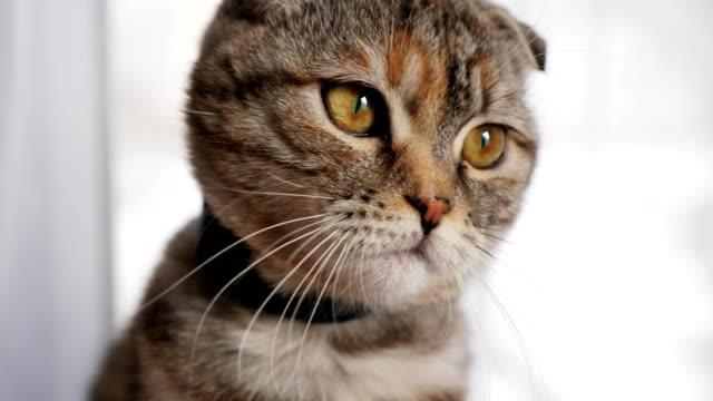 Cute-young-cat-cute-looks-at-the-camera-close-up