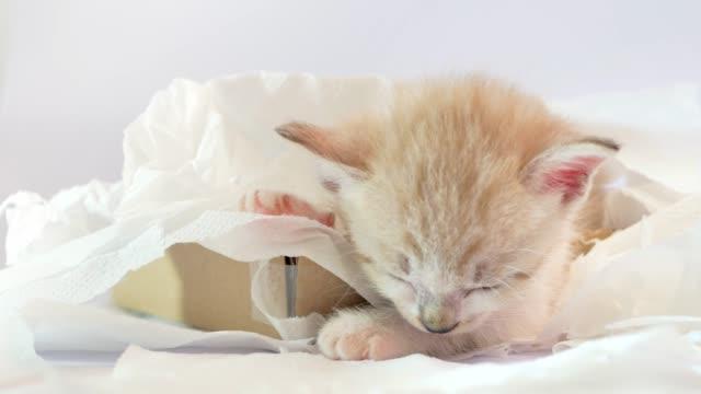 Gatito-durmiendo-en-una-caja-de-papel-de-tejido