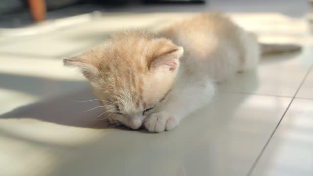 Gato-durmiendo-en-el-piso-