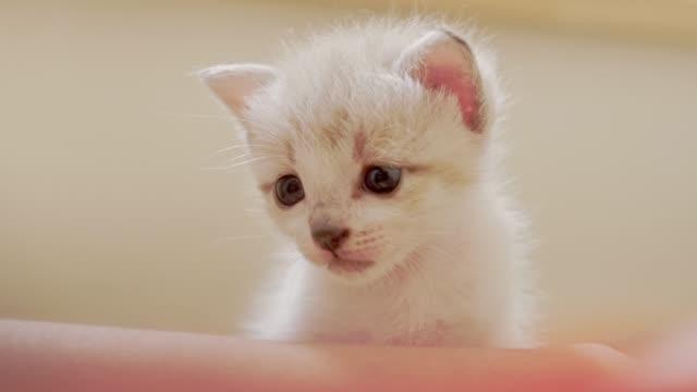 Los-gatitos-están-emocionados-