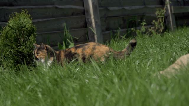 Gato-callejero-Un-gato-que-vive-en-la-calle