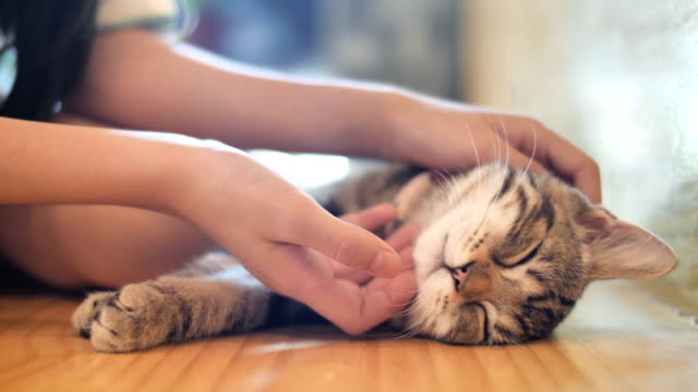 4K-Close-up-hands-of-the-girl-girl-plays-with-sleeping-cute-tabby-cat