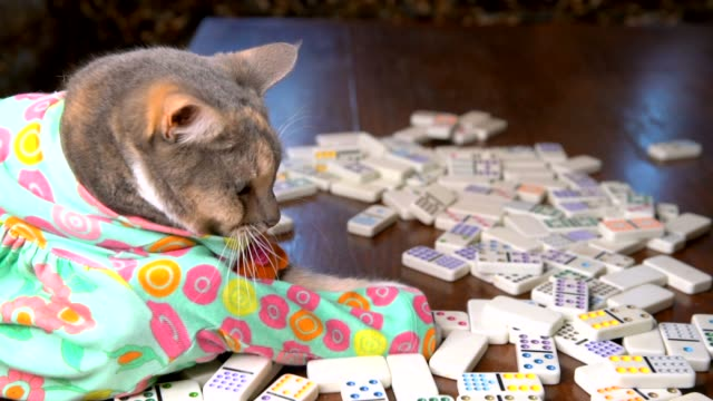 slow-motion-cute-cat-in-colorful-dress-playing-dominoes
