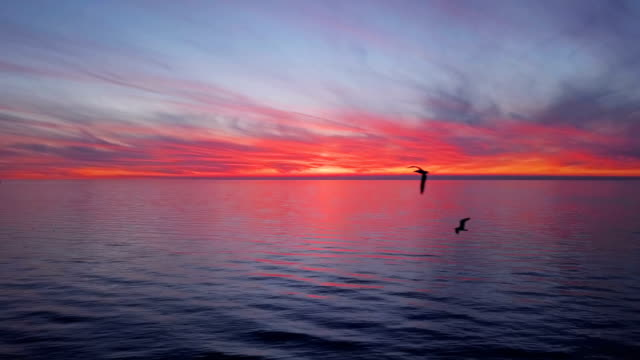 Sunset-taking-off-from-water-surface-sunset-with-flying-seagulls-Croatia-