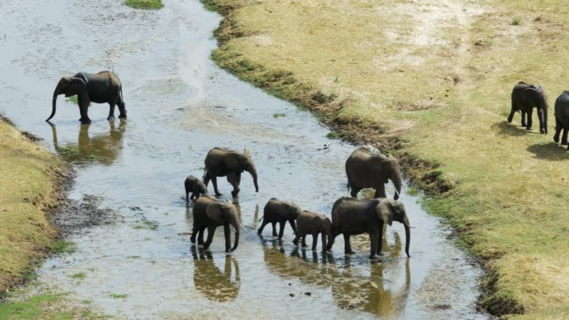 Elephant-group-walking-along-riverbed