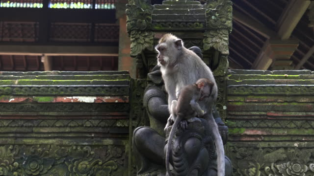 a-female-macaque-holds-her-baby-at-the-monkey-forest-in-ubud-bali