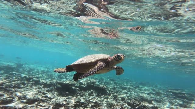 Turtle-floating-around-under-the-water