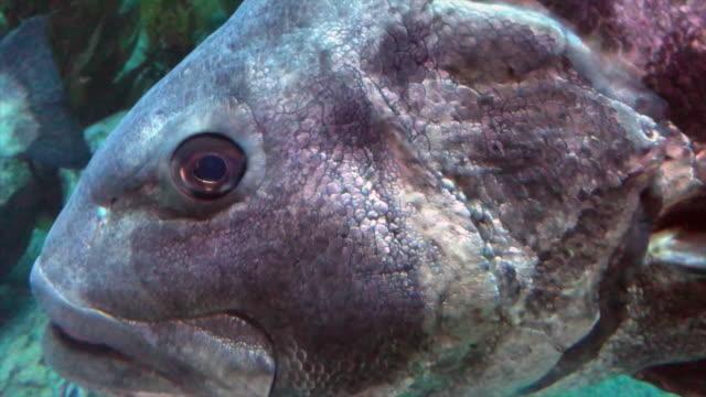 Nadar-bajo-de-mar-gigante
