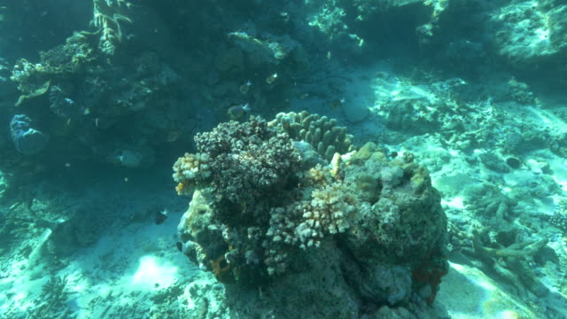 disparo-subacuático-buceo-de-coral-de-dedo-en-Arrecife-arco-iris-en-fiji