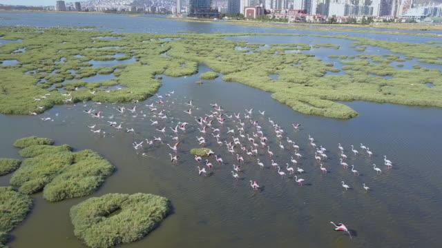 izmir-bay-flamingo-drone-sea