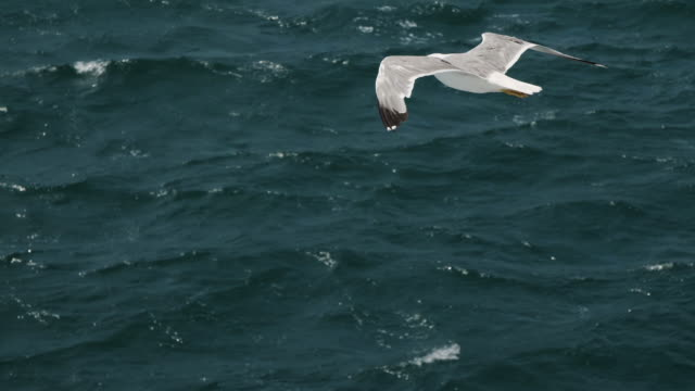 Seagulls-fly-in-the-sky-over-the-sea-from-a-ship-in-Italy-