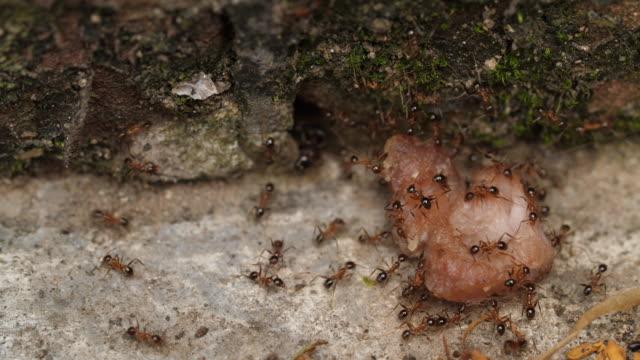 Grupo-de-hormigas-llevando-comida-4k