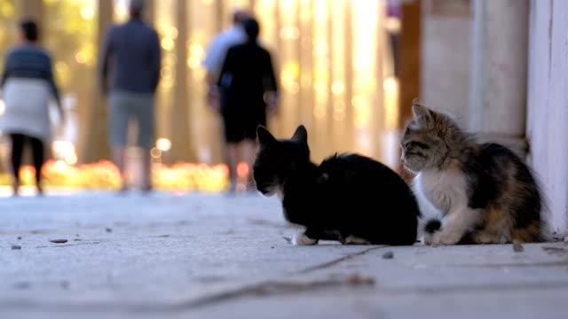 Dos-gatitos-sin-hogar-están-sentados-en-la-acera-paso-de-gente-por-ellos-Cámara-lenta