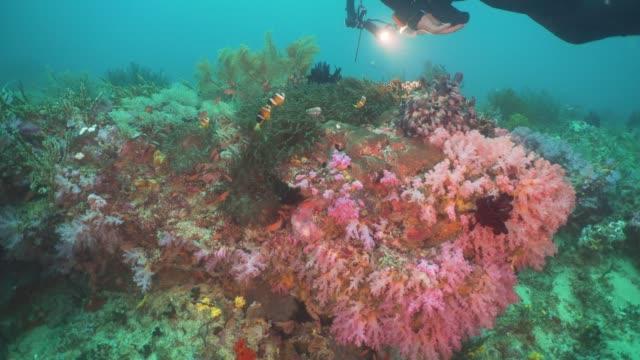 Clownfish-Anemonefish-in-actinia