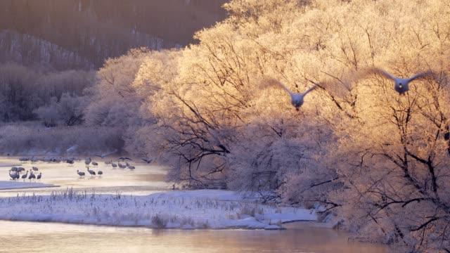 Japanese-Cranes-Hokkaido-Japan