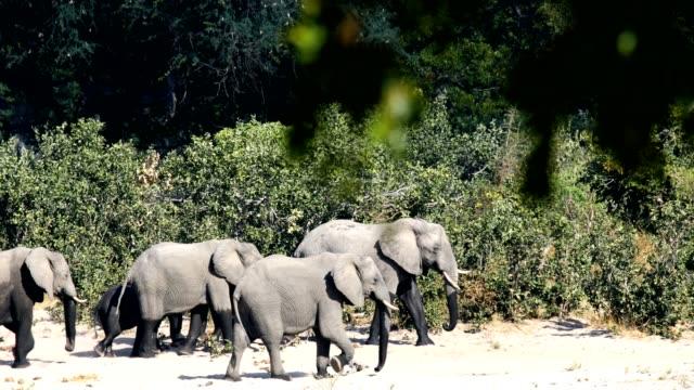 African-elephant-Bwabwata-Namibia-Africa-safari-wildlife