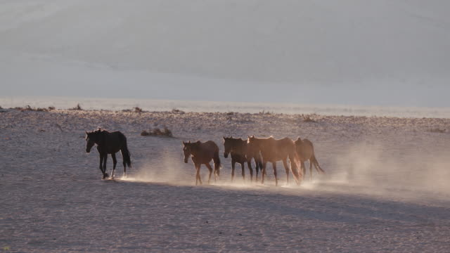 4K-backlit-shot-of-wild-horses-walking-through-desert-landscape