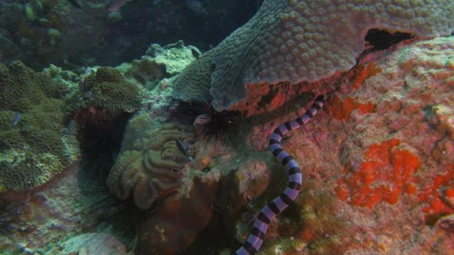 Serpiente-de-mar