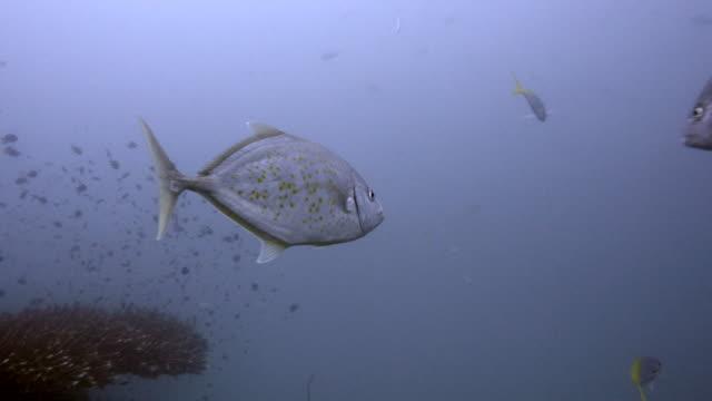 trivial-de-pescado