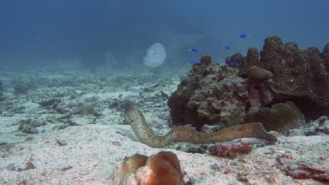 Moray-Eel-Hunting