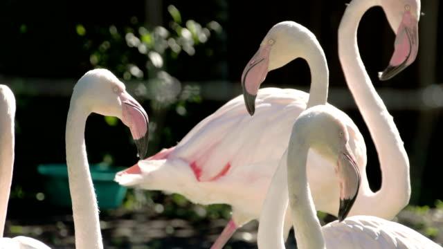 Six-white-and-pinkish-long-neck-flamingos-flocking