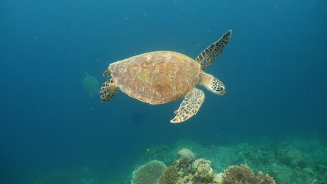 Sea-turtle-en-agua-