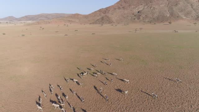 Antena-alta-sobrevolar-a-vista-de-gemsbok-(oryx)-en-el-desierto-de-Namib