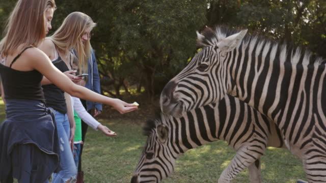Five-children-feeding-zebras-in-wildlife-estate