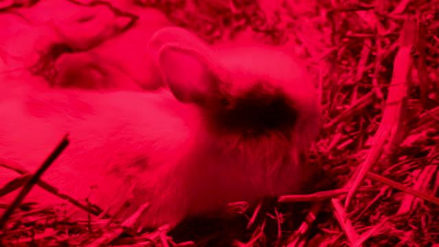 Un-pequeño-conejo-comiendo-un-palo-sobre-el-heno