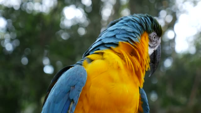 Parrot-Macaw-on-nature-background