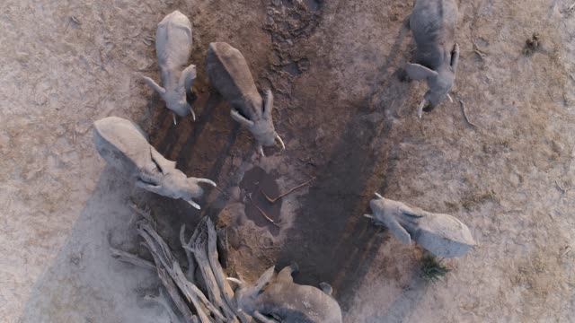 Aerial-zoom-out-view-of-a-small-group-of-elephants-standing-at-a-muddy-waterhole-Botswana