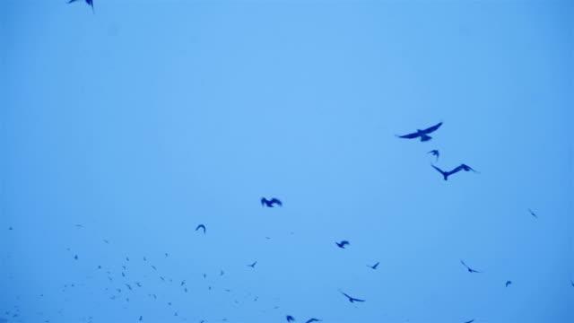 Flock-of-black-birds-in-the-gloomy-sky-