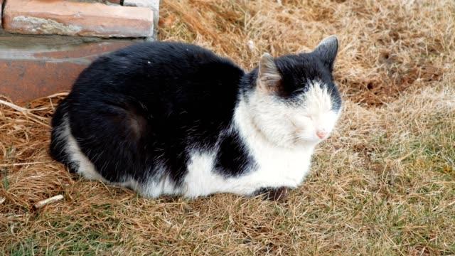 Puss-Resting
