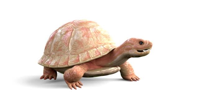 Albino-Tortoise-Walk-Cycle-