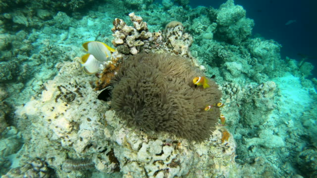 Marine-Reef-Life-With-Fish-Swimming-On-Corals