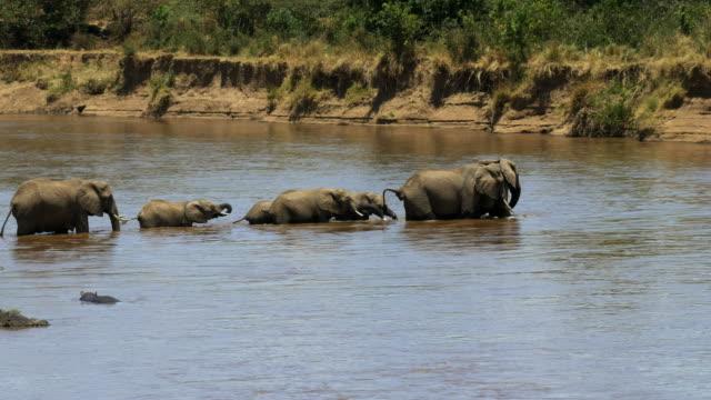 wide-shot-of-an-elephant-herd-crossing-the-mara-river-in-kenya