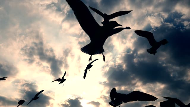 Silhouette-of-flock-of-seagulls-flying-on-the-sky-during-twilight-time-