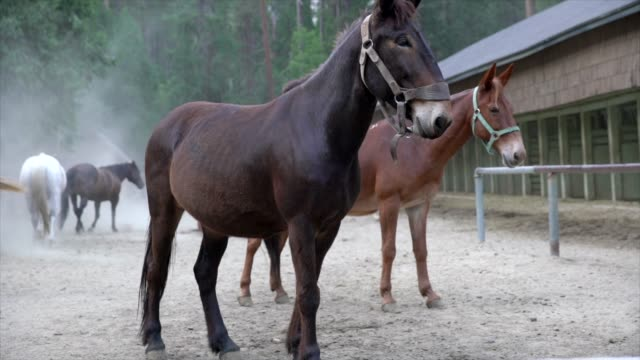 active-horses-and-mules-in-stables