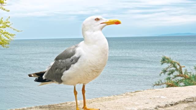 Möwen-zu-Fuß-am-Strand-Hintergrund-natürlichen-blauen-Wasser-