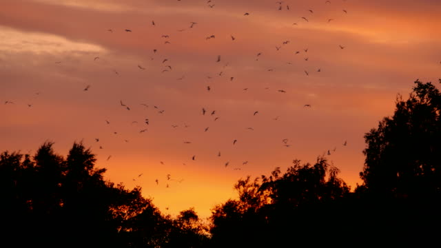 ansioso-por-aves-en-el-cielo