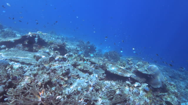 clip-de-aguas-poco-profundas-de-los-corales-en-Arrecife-de-arco-iris-en-fiji