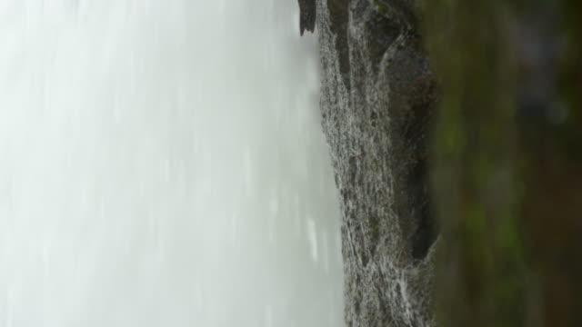 Disfrute-de-una-de-las-aves-que-viven-y-anidado-detrás-de-las-cascadas-cataratas-del-iguazú