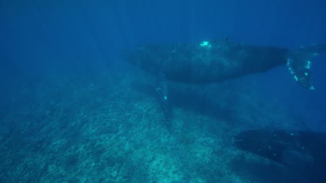 Rosado-de-ballenas