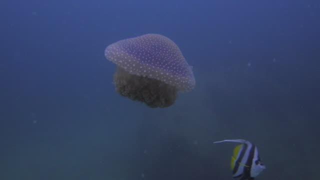 Gelatina-de-pescado-